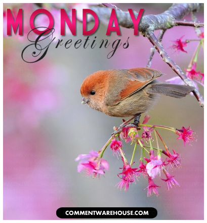 Monday greetings birdy graphic commentwarehouse view full size view slideshow m4hsunfo