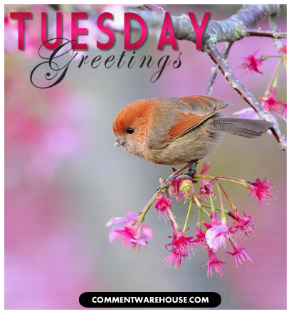 Tuesday greeting birdy graphic commentwarehouse view full size view slideshow m4hsunfo