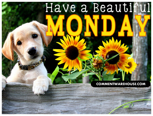 http://www.commentwarehouse.com/gallery3/var/resizes/Days-of-the-week-graphics/Monday-Graphics/beautiful_monday_puppy_sunflowers.png?m=1381081579