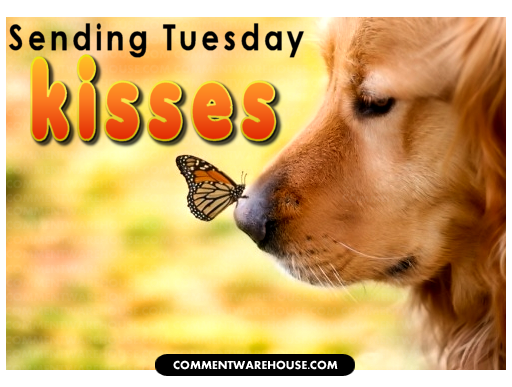 Image result for wonderful tuesday pictures