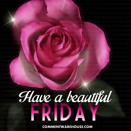 Have a beautiful Friday sparkling pink rose