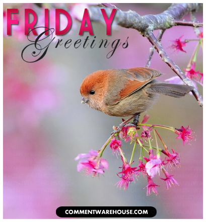 Friday Greetings little bird