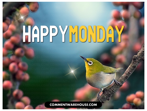 Happy Monday | Monday graphic