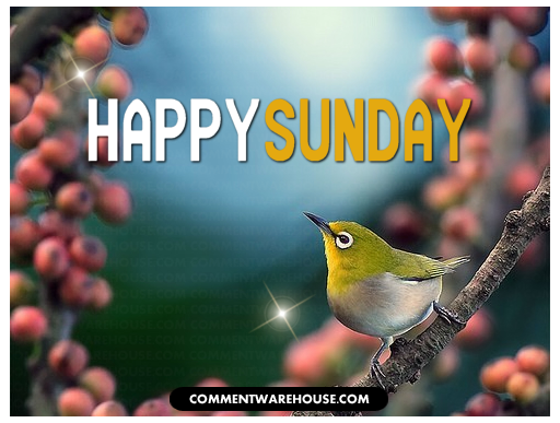 Happy Sunday Birdy – Commentwarehouse