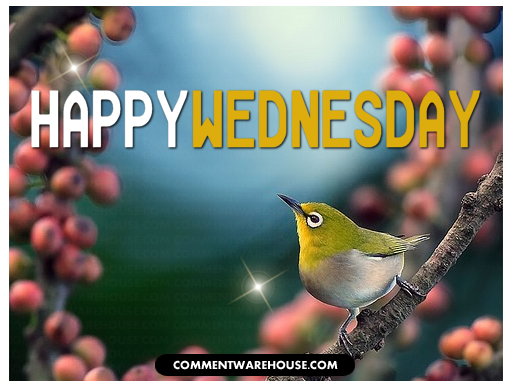 happy wednesday bird on branch