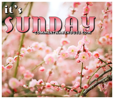 Its Sunday Pink Blossoms