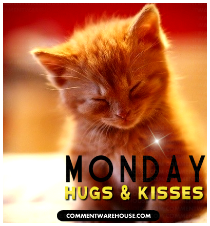 Monday hugs and kisses adorable kitten | Monday graphic