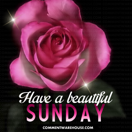 Have a beautiful Sunday Pink Rose Sparkles