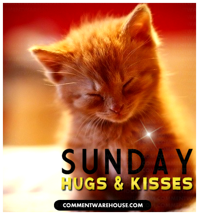 sunday hugs and kisses adorable kitten