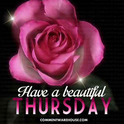 have a beautiful Thursday Pink Rose