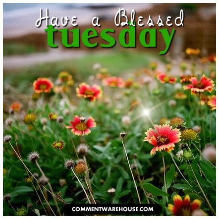 Have a blessed Tuesday Flower Field | Tuesday Graphic