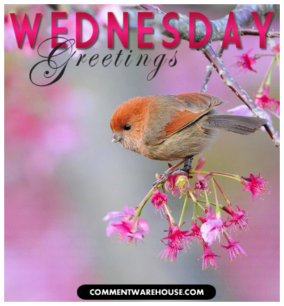 Wednesday Greetings Birdy