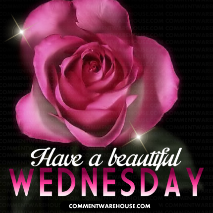 Have a Beautiful Wednesday Pink Rose  Commentwarehouse