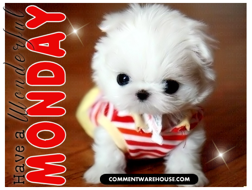 Have a wonderful Monday cute puppy | Monday Graphic