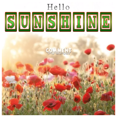 Hello Sunshine poppies | Hello Graphics