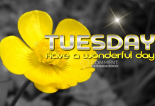 Tuesday Have a Wonderful Day | Tuesday Comments & Graphics