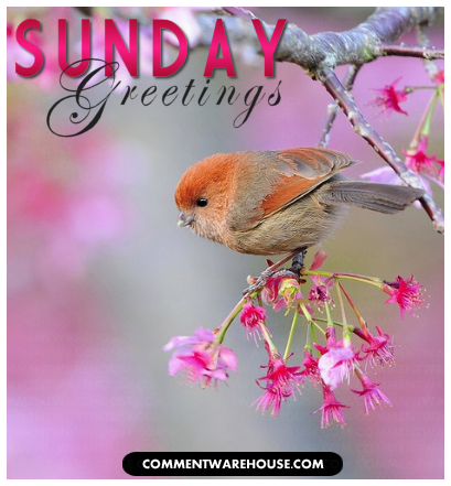 Sunday Greetings