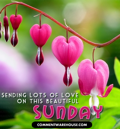 Sending Love on this Beautiful Sunday Heart Blossoms
