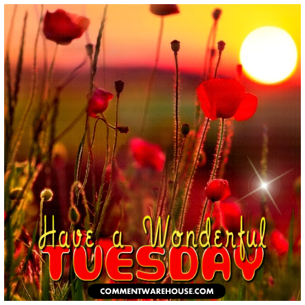 Have a wonderful Tuesday sunrise | Tuesday Graphic