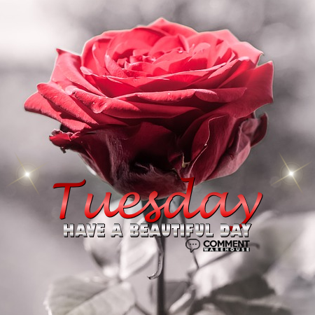 Tuesday Have a Beautiful Day | Tuesday Comments & Graphics