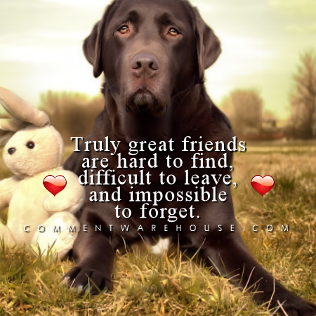 Truly great friends are hard to find, difficult to leave, and impossible to forget | Friendship Quotes